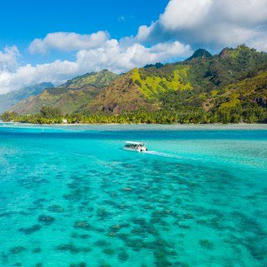 Ma'a Tahiti on The Motu 030