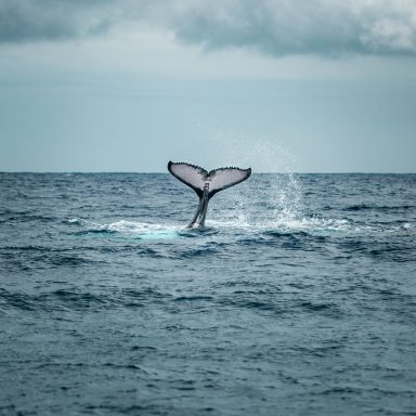 Dolphin and Whale Watching Tour 002